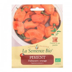 La Semence Bio - Piment Habareno Orange