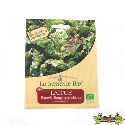La Semence Bio - Laitue batavia rouge grenobloise