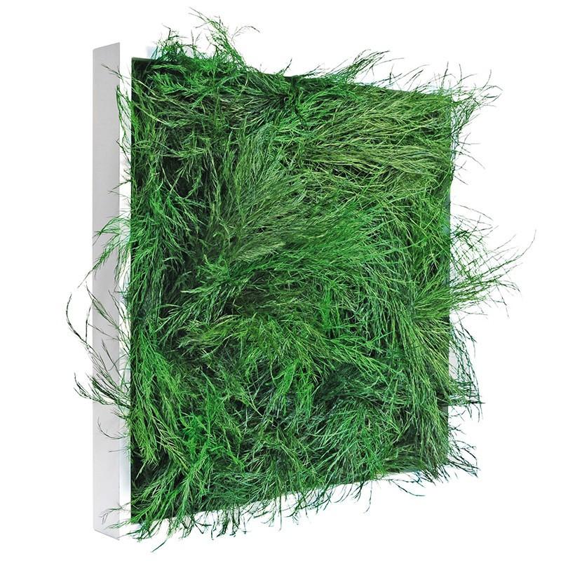 tableau végétal stabilisé VAN 40 40X40CM