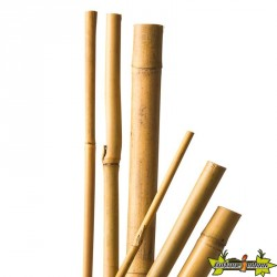 5 TUTEURS BAMBOU NATUREL - H120 CM X ?10-12 MM