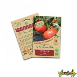 La semence Bio - Tomate 1884