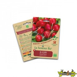 La semence Bio - Radis raxe