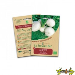 La semence Bio - Navet plat blanc