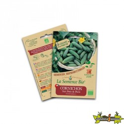 La semence Bio - Cornichon vert petit de Paris