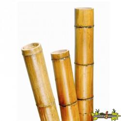 Tige bambou naturel laqué décoratif - H300 cm X Diam100/120 mm - Nature