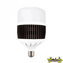 Advanced Star - Ampoule LED LedStar 50W - 6500K