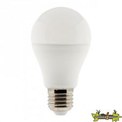 455003 AMPOULE LED STANDARD 6W E27 2700K 470LM
