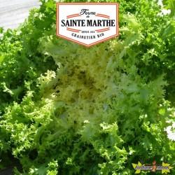La ferme Sainte Marthe - 500 graines Chicorée frisée de Meaux