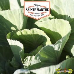 La ferme Sainte Marthe - 80 graines Chou Cabus Coeur de Boeuf des Vertus