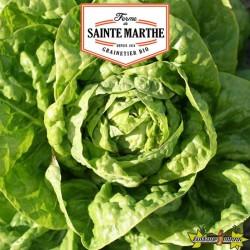 La ferme Sainte Marthe - 500 graines Laitue Pommée Grosse Blonde Paresseuse