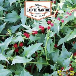 La ferme Sainte Marthe - 200 graines Epinard Fraise