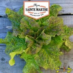 La ferme Sainte Marthe - 500 graines Laitue Pommée Saint Antoine