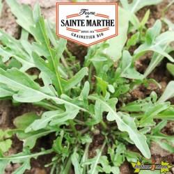 La ferme Sainte Marthe - 1000 graines Roquette Cultivée