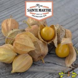 La ferme Sainte Marthe - 50 graines Coqueret du Perou