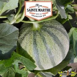 La ferme Sainte Marthe - 15 graines Melon Charentais