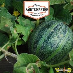 La ferme Sainte Marthe - 15 graines Melon Ananas d'Amérique à chair rouge
