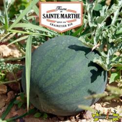 La ferme Sainte Marthe - 15 graines Pastèque Sugar Baby