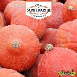 La ferme Sainte Marthe - 15 graines Potiron Potimarron