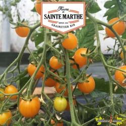 La ferme Sainte Marthe - 50 graines Tomate Cocktail Clémentine