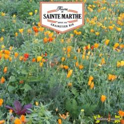 La ferme Sainte Marthe - 800 graines Pavot de Californie