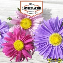 La ferme Sainte Marthe - 500 graines Reine Marguerite à Fleurs Simples Variées