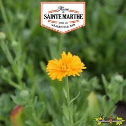 La ferme Sainte Marthe - 100 graines Souci Officinal