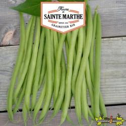 La ferme Sainte Marthe - 10 grammes Haricot Nain Cupidon Filet Sans Fil Mangetout