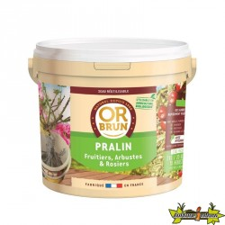 Or Brun - Pralin 2Kgs