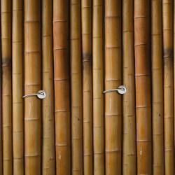 tuteur Bambou 60cm