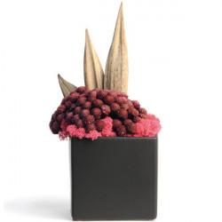 Plante stabilisée en pot So Fresh 22