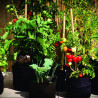 Smart Pot Original - 4 gallons 15L - pot tissu geotextile