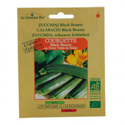 GRAINES BIO -COURGETTE LONGUE BLACK BEAUTY