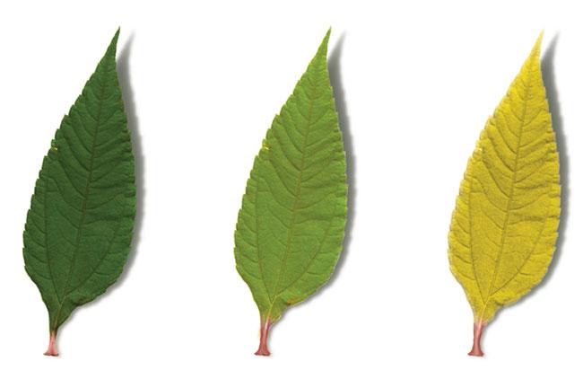 stikstof-feuilles.jpg
