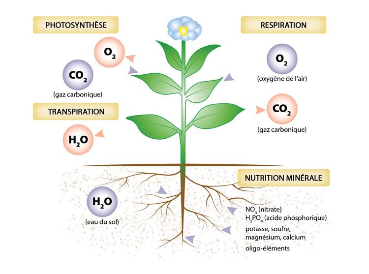 hydroponic bloom et grow