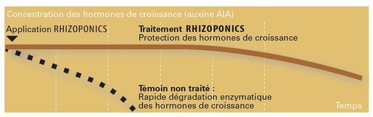 L'action du Rhizoponics